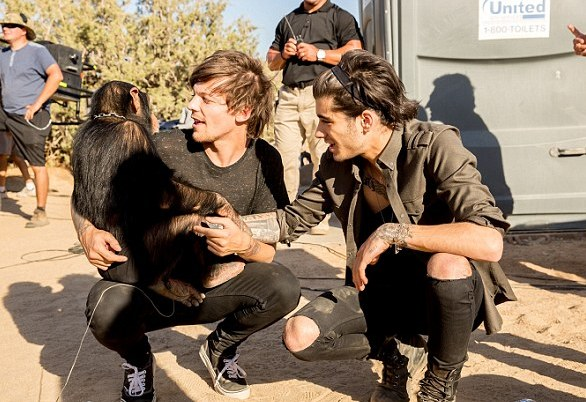 1 D slammed for using 'chained chimpanzee' in new music video