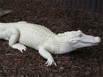 Albinism: albnism, en, fitness, genetics, health, pale ...