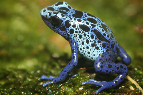 Pictures of amphibians - photo#4