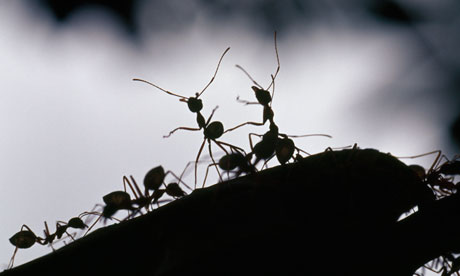 Stanford researchers: Ants have been using Internet algorithms for ages
