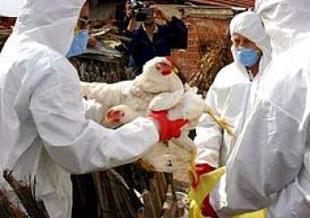 Bird flu back in Japan after 2011