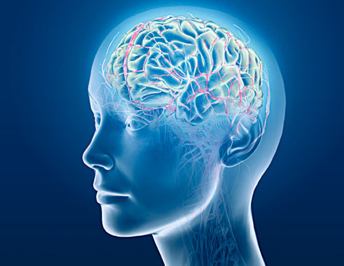 the biological mind The mind-body problem was first raised, rather circuitously, as a non-problem by  aristotle more than 2000 years ago he postulated that, it is.