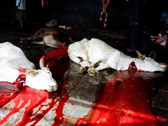http://www.topnews.in/files/Cows-slaughter.jpg