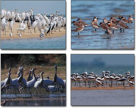 http://www.topnews.in/files/Gujarat-birdsanctuary.jpg