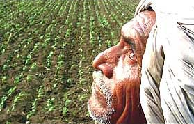 Potato farmers too threaten to commit suicide in West Bengal
