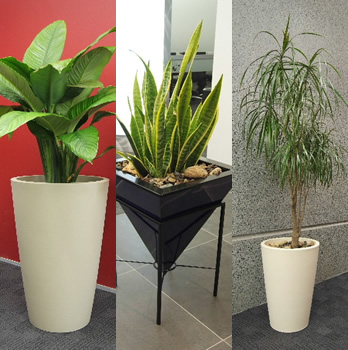http://www.topnews.in/files/Indoor-plants.jpg