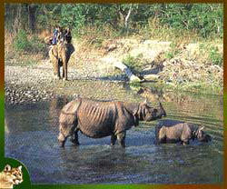 Kaziranga National Park gears up for safe migration of animals