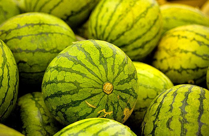 ������ ����� ���� ����� Melons.jpg