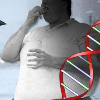 Obesity linked to carb breakdown gene