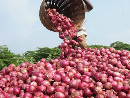 Agriculture Ministry not to halt export of onions