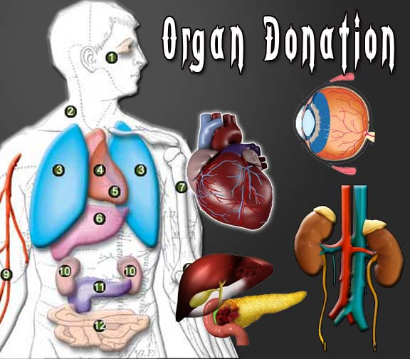 effects on organ donation Deceased organ, eye or tissue donation is the process of giving an organ (or a part of an organ), eye, or tissue at the time of the donor's death, for the purpose .