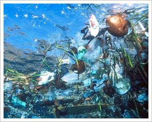 Le voyage inquiétant des déchets : de nos mains jusqu'aux océans