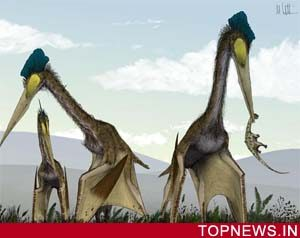 Giant Pterosaurs were too heavy to fly, says scientist