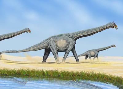 Rare-dinosaur-fossil