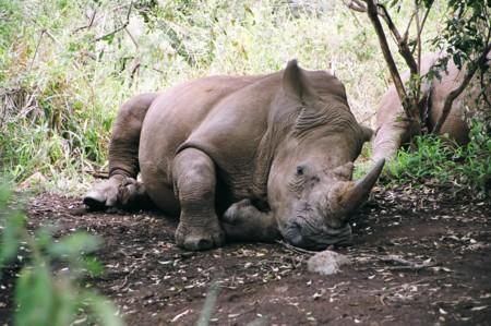 Rhino forex company