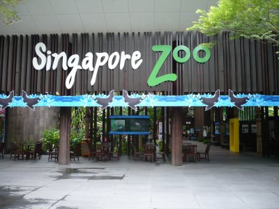 Singapore  Incident Pictures on Singapore   Three White Tigers At The Singapore Zoo Attacked And