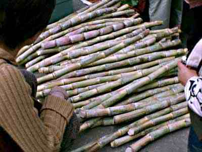 Uttar Pradesh farmers call off stir for higher sugarcane price