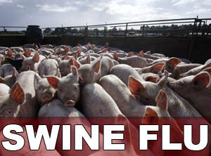 Cybercrooks take advantage of swine flu hysteria