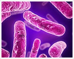 TB Bacteria: http://www.topnews.in/files/TB-bacteria-7818.jpg