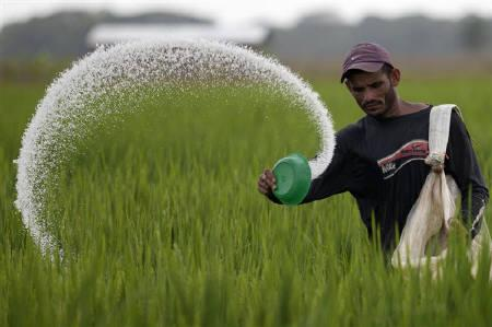 Government delays plans to increase urea prices