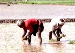 Bihar Farmers