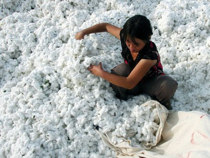 Govt of India lifts ban on cotton export