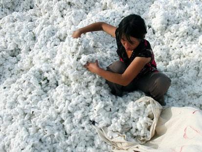 http://www.topnews.in/files/cotton_0.jpg