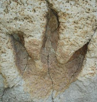 Dinosaur footprints found in New Zealand