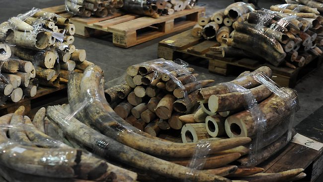 ivory-smuggling