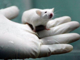 Mouse model of deadly human cancer cured for first time