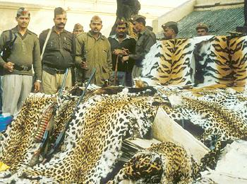 Five poachers held with animal skins