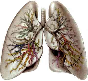 سایت مشاوره فوق تخصصی بیماریهای ریوی دکتر محمد رحیمی راد