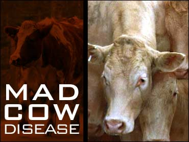 http://www.topnews.in/files/mad%20cow%20disease.jpg