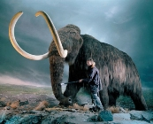 Japanese scientists aiming at cloning mammoths