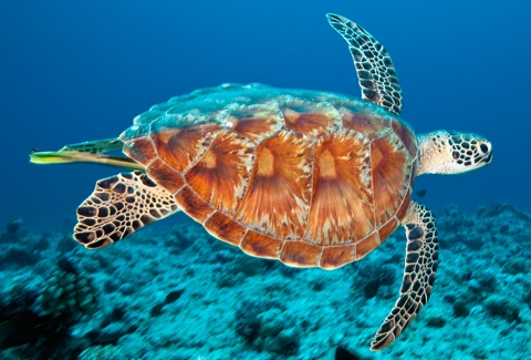 Climate change, severe threat to marine turtles | TopNews