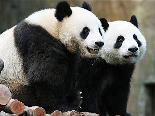import two pandas