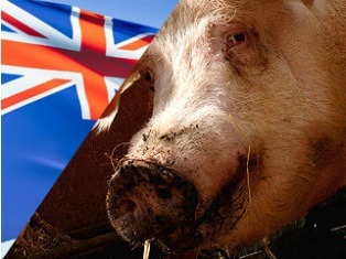 Australia decrees powers to quarantine swine flu victims