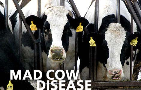 Blood test for mad cow disease developed by Canadian researchers ...