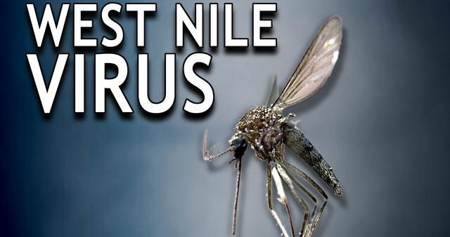 West Nile virus has reached Austria, virologist says