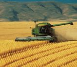 Punjab sets new record of wheat procurement