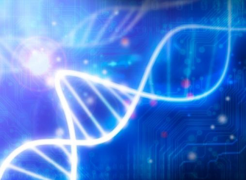 Key immune system gene could subdue HIV
