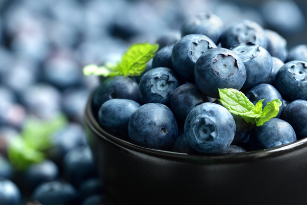 Old people should drink blueberry concentrate to improve brain function