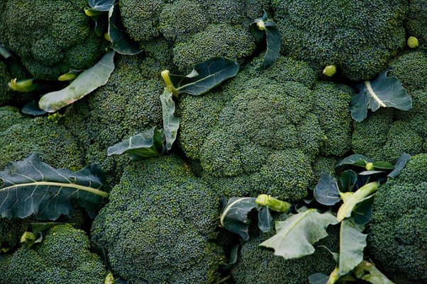 A serving of broccoli a day keeps prostate cancer at bay