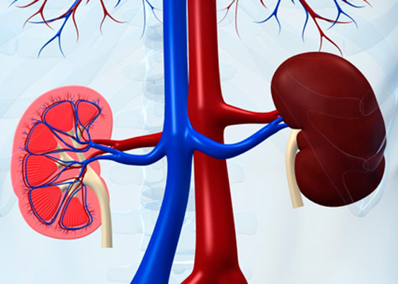 Prevent yourself from chronic kidney disease!