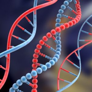 DNA barcodes that detect meat's variety