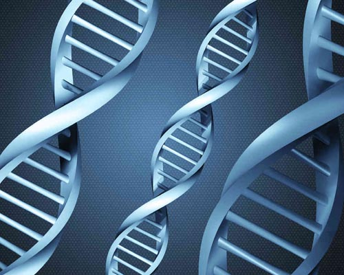 Genetic match! People choose partners with similar DNA