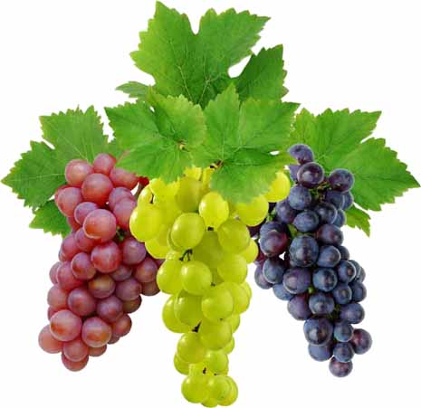 Eat grapes twice a day to keep Alzheimer's at bay