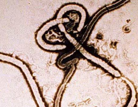 Cure for deadly Ebola virus comes closer to reality