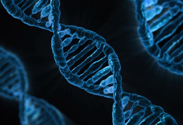 26 novel genes linked to intellectual disability