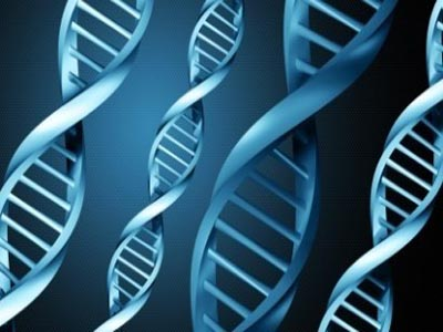 New gene linked to heart attack risk identified